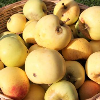 Retsept: Lihtsaim õunamoos